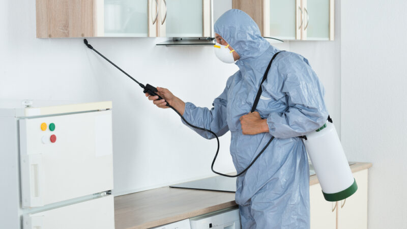Amazing Benefits of Having Pest Control Services in Your Home